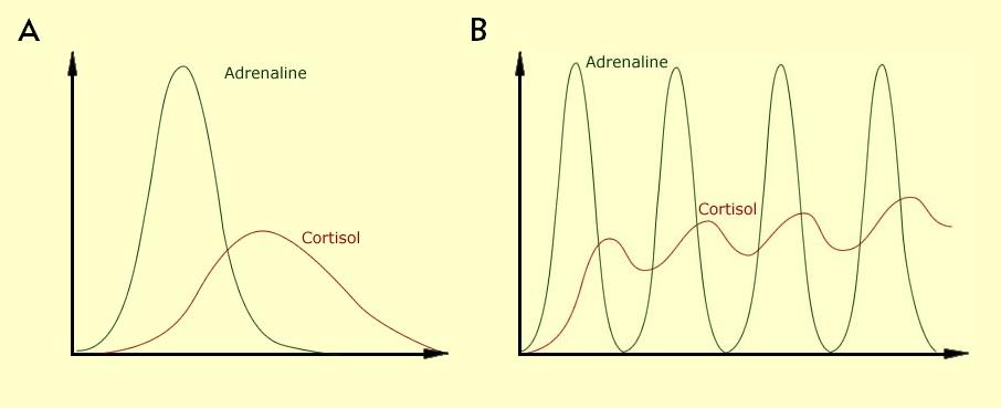 adrenalina cortisol - DTM - músculos mastigatórios