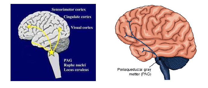 Substncia cinzenta periaquedutal pdf 2 neuroup ccuart Choice Image